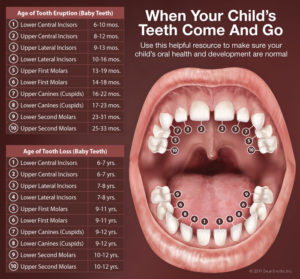 childrens-mouth-anatomy