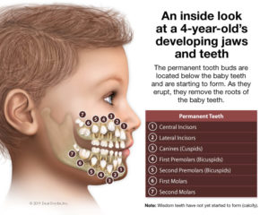 kids-developing-jaws-teeth