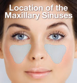 sinuses-location-thumb
